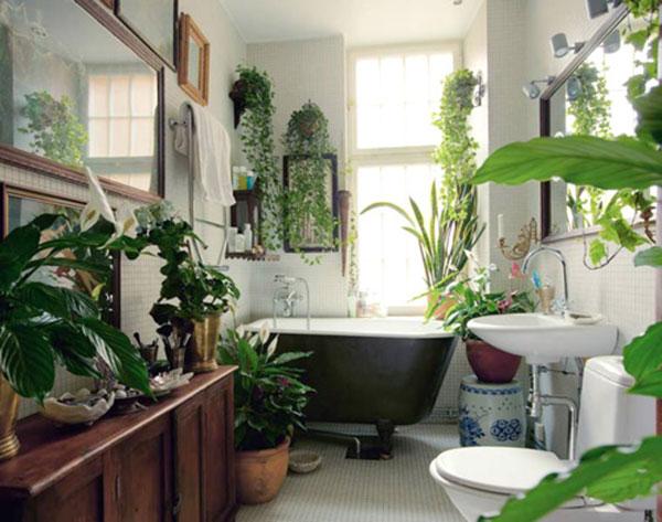 các loại cây khử mùi nên trồng trong nhà vệ sinh, wc, toilet